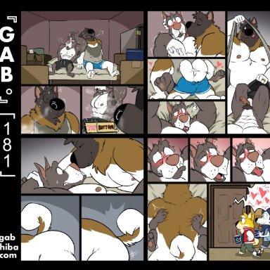 gabshiba, bau husky, gab shiba, ruff bull, voff akita, akita, canid, canine, canis, domestic dog, husky, mammal, nordic sled dog, pit bull, shiba inu